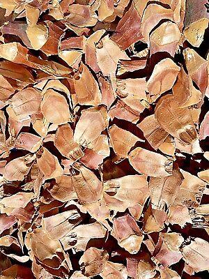 Pine Cone Craft (Sugar Pine Cone Brachs Scales Pre-Cut Art Craft Holiday 1 Gallon Zip Bag)