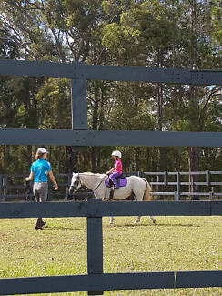 12.2 Hand Australian Riding Pony leadline or second pony