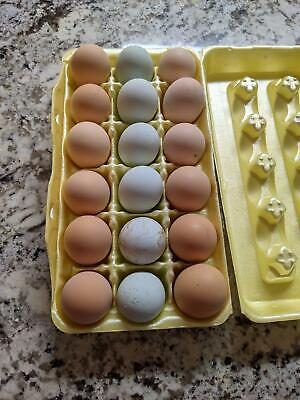 111 Mix Fertile Unwashed Eggs For Hatching Incubator