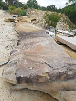 Sandstone Roughbacks