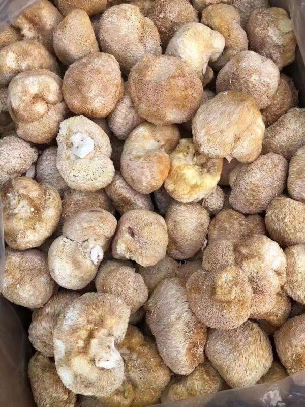 Dried Lion Mane Mushroom 猴頭菇 16 oz/ 1LB - US Seller