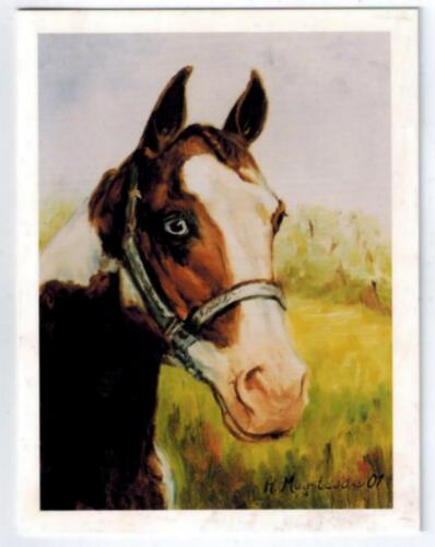 New Brown & White Horse Portrait Notecard Set - 12 Note Cards By Ruth Maystead