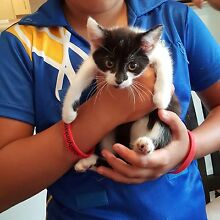 Kittens need forever home Rutherford Maitland Area Preview