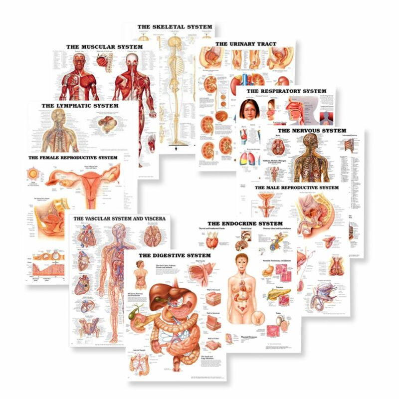 Systems of the Body Anatomy Chart Set  Laminated