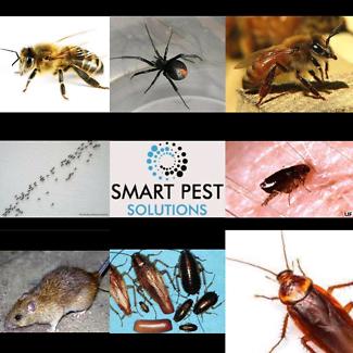 Pest control cheap illawarra area