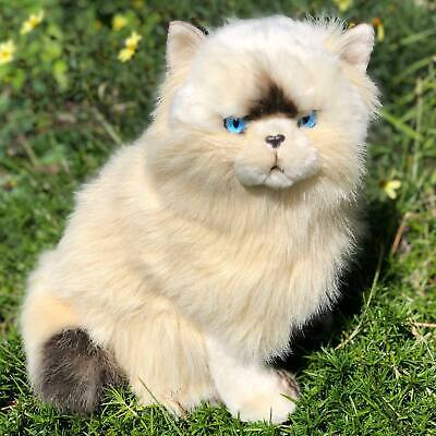 Sheba Chocolate Himalayan Cat- Plush Animal Collectable-Stuffed Animal Kitten