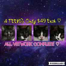 $49 TEEN FELINES fully vetted can deliver Ipswich Ipswich City Preview
