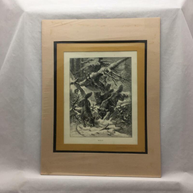 Wildlife Illustration Animate Creation 1898 Rev Woods Matted Print WOLVES