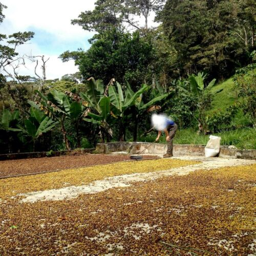 14.8 ACRE coffee farm in Venezuela 4 bed house