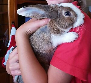 Reward for our lost rabbit Alkimos Wanneroo Area Preview