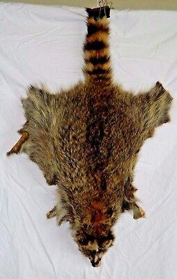 """Used, Raccoon Fur Hide Pelt Soft 32"""" Medium Vintage for sale  Decatur"""