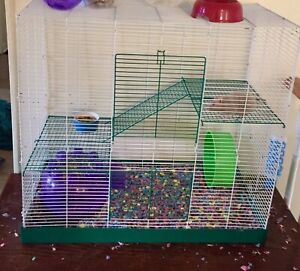 Female rats to good home