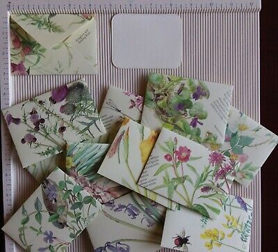 12 Handmade ENVELOPES with Edith Holden Watercolours & Cream insert cards (C)