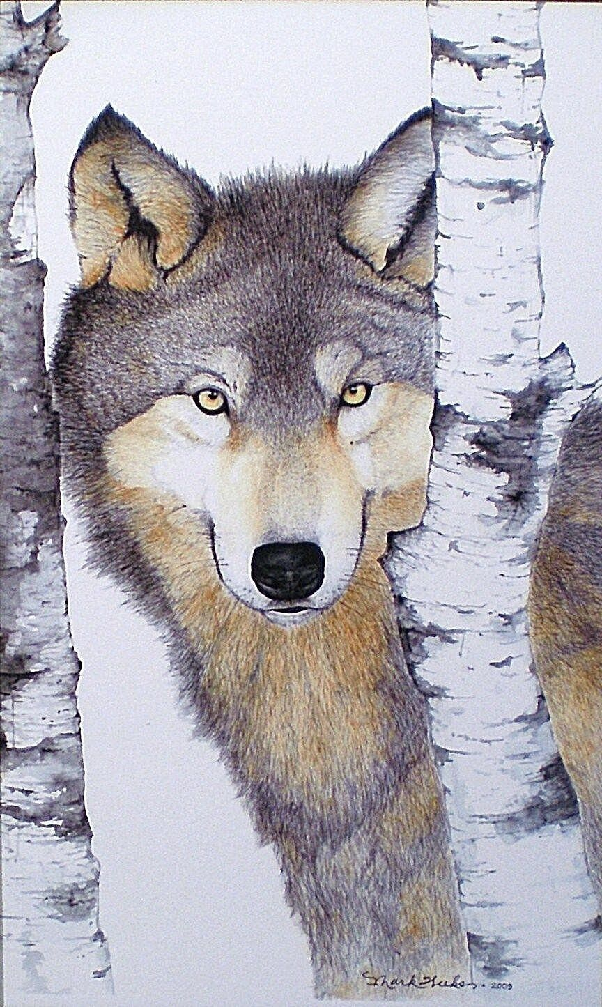 Aceo Miniature Painting Art Trading Card Wolf Wildlife Nature Animal