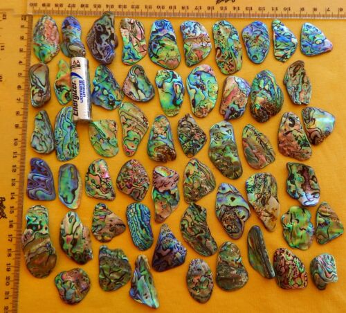 New Zealand Paua / Abalone Shell Pieces, 100 grms / 3.5 oz