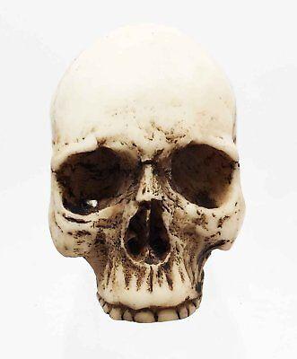 - Small 1.75 Inch Tall Human Skull Gothic Decor Half Jaw Halloween Miniature