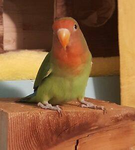 This awesome little one has found an aviary paradise as home.