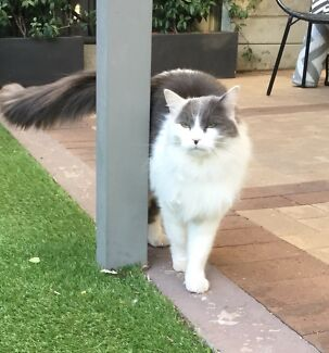 Mr Fluffy is looking for a loving new home