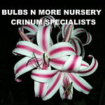 Bulbs N More Nursery