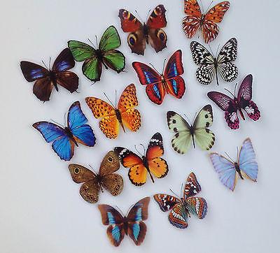 15 Stück Deko Schmetterlinge mit Magnet Magnetschmetterling Kühlschrankmagnet