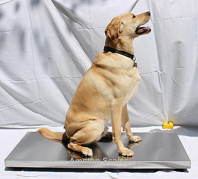 Super Heavy Duty Steel Vet Scale 1000 X 0.5 Lb 43x20 Inch Digital Dog Calf Large
