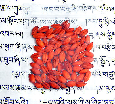 Blessed Tibetan Buddhist Nechung Dalai Lama Oracle Prevent Flood DEATH Amulet