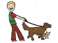 Anthony David Dog Walking service