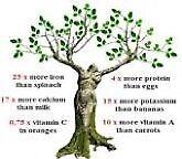 Moringa Oleifera /Drumstick Tree/plant Available.