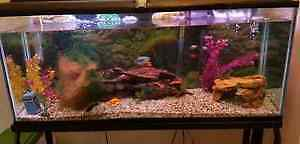 Complete 55 Gallon fish tank with fish! London Ontario image 2