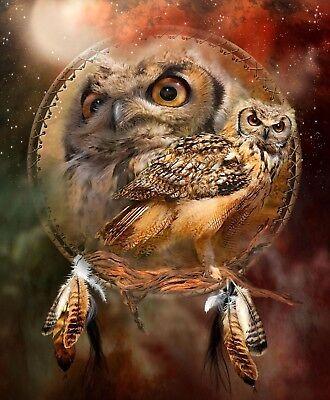 Native American Dream Catcher Wise Owl 8.5x11 Matte Art