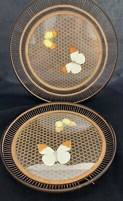 2x Vintage Oriental Bamboo / Glass Base Butterfly Taxidermy Round Serving Trays