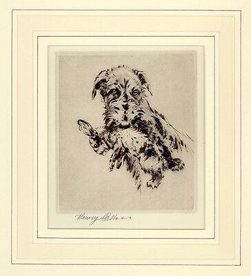 LURCHER DEERHOUND DOG ART LIMITED EDITION ENGRAVING PRINT - by Henry Wilkinson