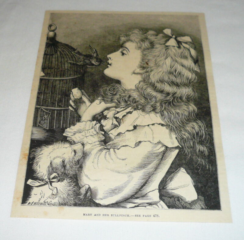 1878 magazine engraving ~ LITTLE GIRL PLAYING WTH HER BULLFINCH