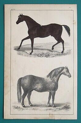 HORSES Race & Cart - 1853 Hand Colored Antique - Cart Racing Horses