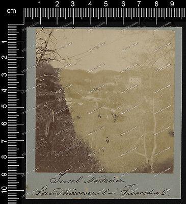 Vintage Photo-insel madeira-Funchal-um 1880/90-Landhäüser-3