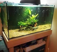 3 foot aquarium Mount Colah Hornsby Area Preview