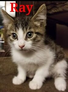 Ray is a little guy looking for his family !