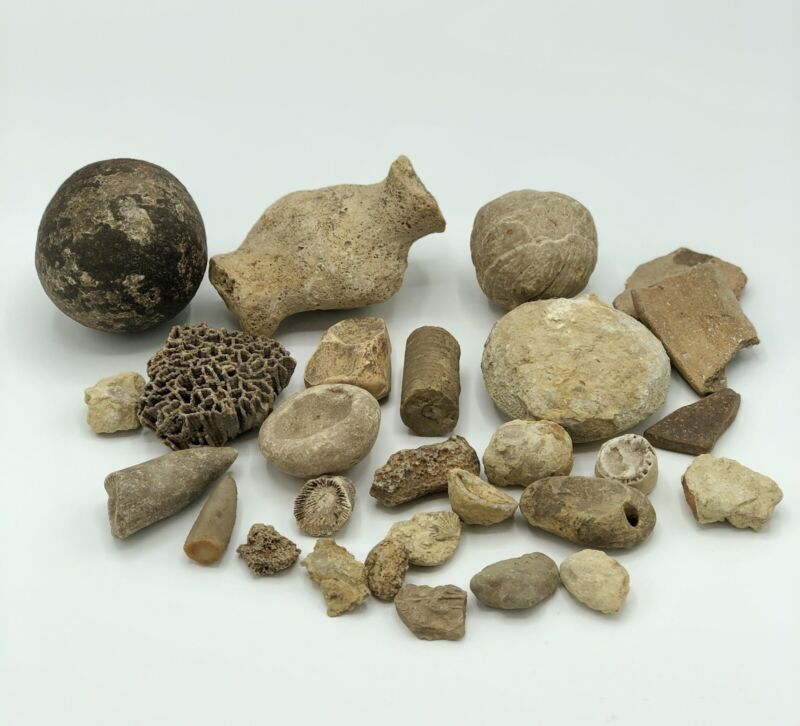 Lot of Assorted Fossils 28pcs.  Coral Bone Concreation /b