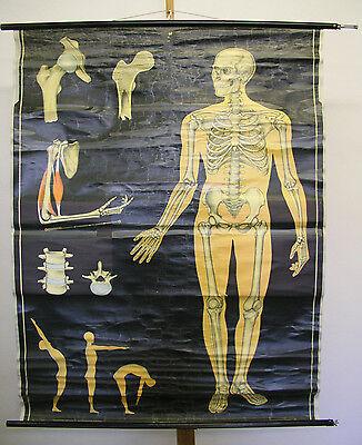 Wall Mural Skeleton Skeleton Bone Man 114x162cm ~ 1965 Vintage Wall ...