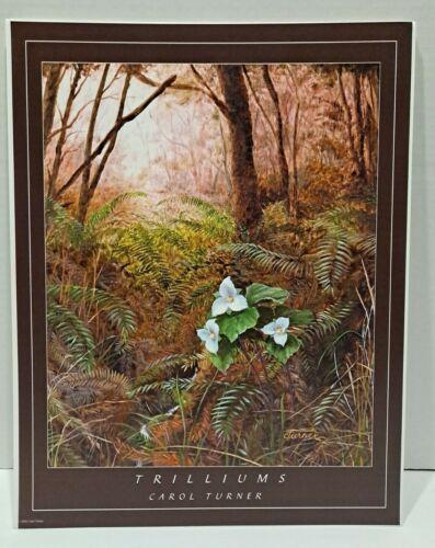 TRILLIUM FLOWER FERN FOREST BOTANTICAL, PRINT BY Carol Turner Reprint 2006 - $10.00