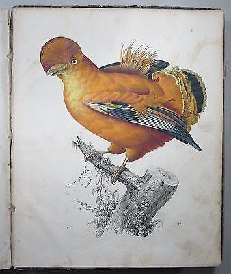 """""""DAS BUCH DER WELT"""" 1847, 36 handkolorierte Lithographien, Stahlstiche, Hoffmann"""