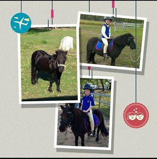 Shetland Pony  Jimboomba Logan Area Preview