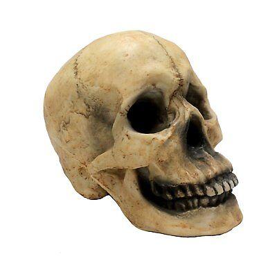Large Lifesized Resin 1:1 Scale Human Bone Skull for home decor, Halloween - Large Scale Halloween Decorations