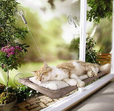 Cat House Bed Window Furniture Sleeping Bad ...