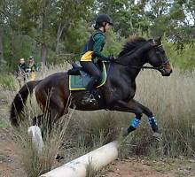 pony club/adult rider horse Broadwater Busselton Area Preview