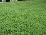 Peace river lawn and yard care services