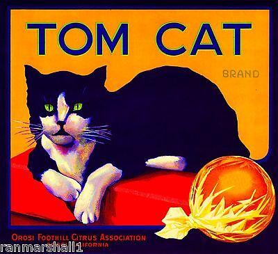 Orosi Tulare County Tom Cat Orange Citrus Fruit Crate Label Vintage Art Print