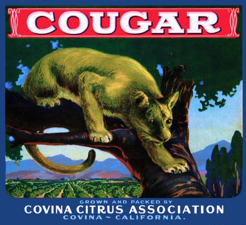 Covina Cougar #3 Mountain Lion Orange Citrus Fruit Crate Label Art Print