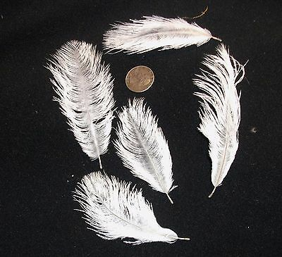 White Ostrich Feathers (OSTRICH FEATHERS  MINI 2-5