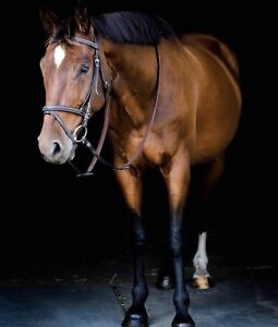Amazing dwb gelding available for part board